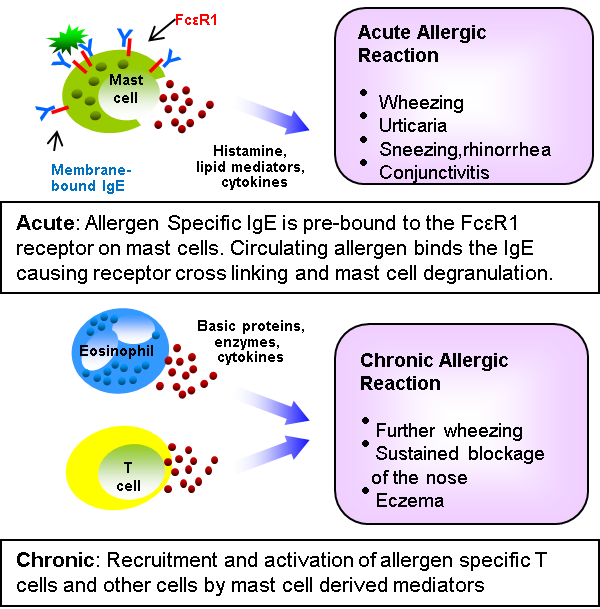Allergy - Figure 1