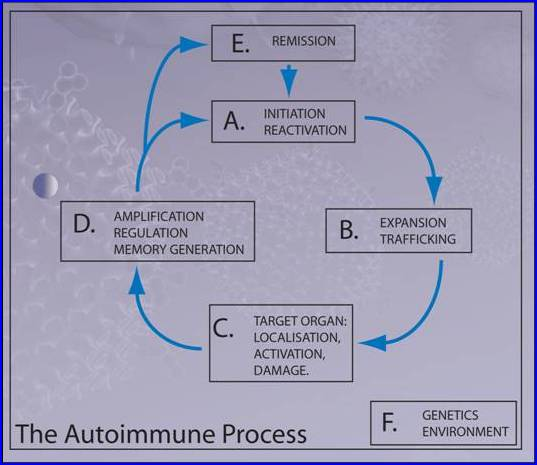 Autoimmunity - introduction - Figure 1