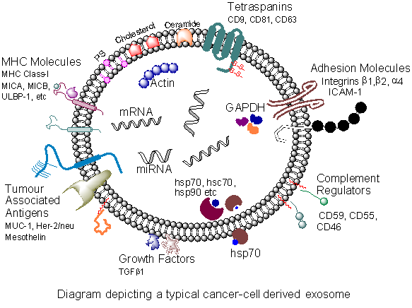Exosomes in cancer immunology - Figure 1b