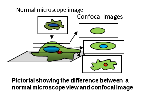 Laser Confocal Microscopy - Diagram