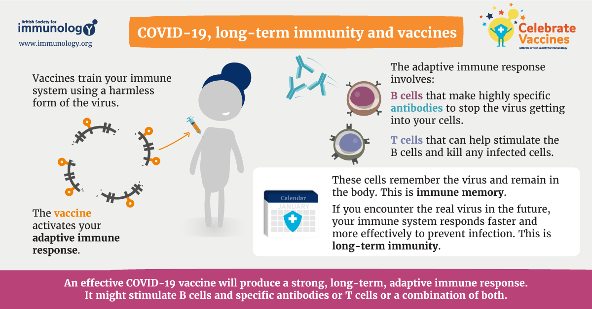 Covid 19 Long Term Immunity And Vaccines British Society For Immunology