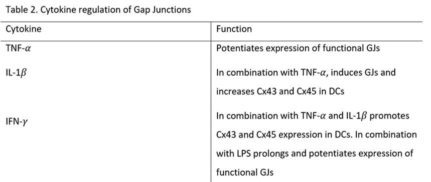 Gap Junctions In The Immune System British Society For Immunology