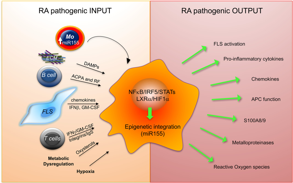 Inflammation and immune resolution
