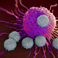 T-cells attacking cancer cells