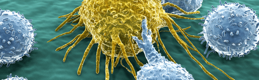 Cancer cell and lymphocyte